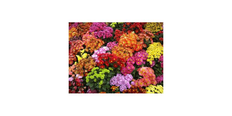 Cele mai frumoase flori de toamna pentru buchete spectaculoase